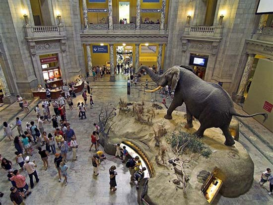 Museum Of Natural History Founded